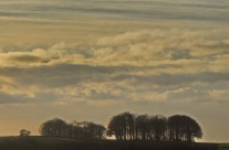 Beech On The Horizon
