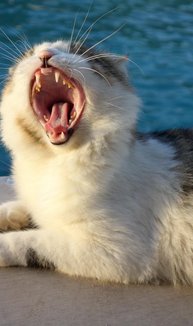 Yawn Or Roar